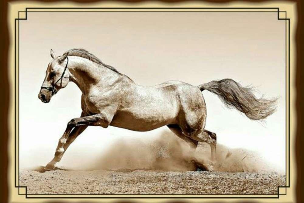№18 Плакетка Лошадь
