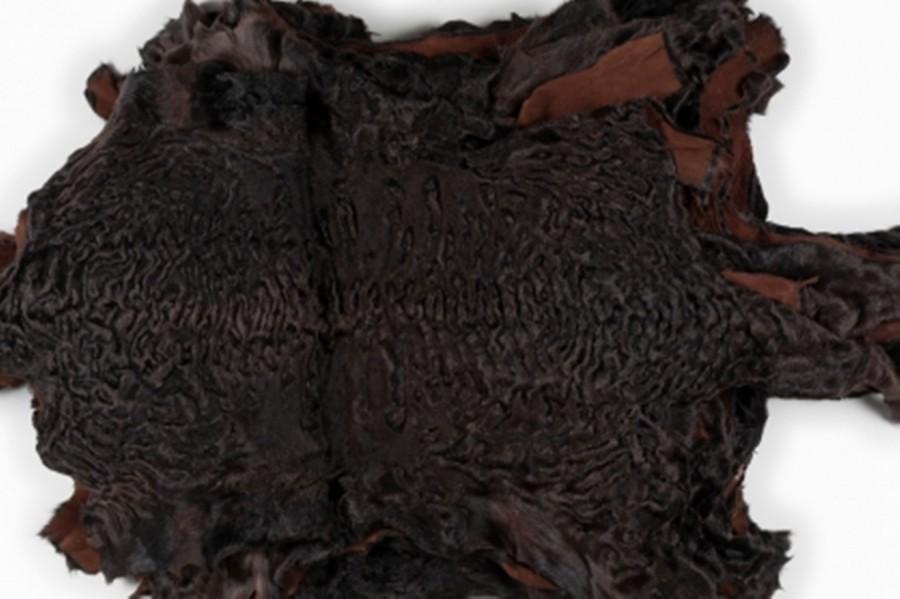 Каракуль, цвет Темный шоколад