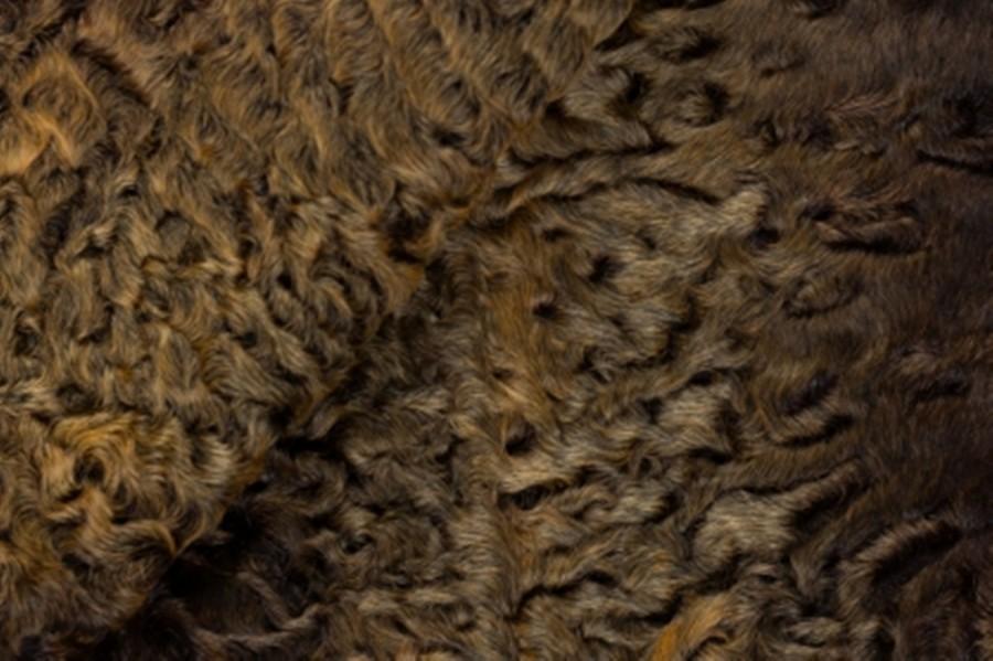 Каракуль крашенный в цвет золотой гобелен с хребтом
